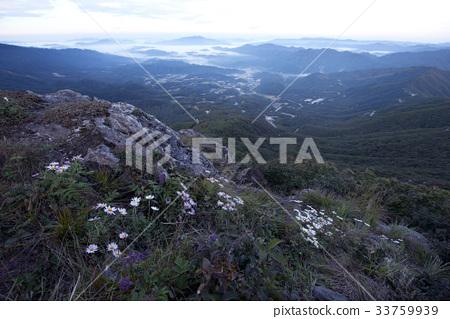 산구절초,도솔산,양구군,강원도 33759939
