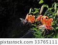 곤충, 꽃, 나비 33765111