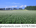 廣闊的 土豆 原野 33767280