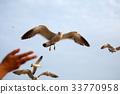 갈매기, 날갯짓, 던지기 33770958