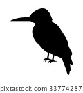 Kingfisher Flat Design Vector Illustration 33774287
