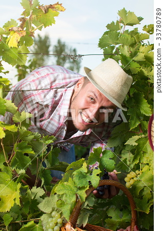 Happy farmer among the grape rows 33780789