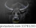 Monochrome portrait big buffalo 33781283
