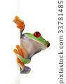 Tree frog 33781485