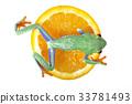 Tree frog 33781493