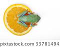 Tree frog 33781494