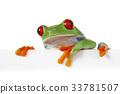 Tree frog 33781507
