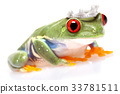 Tree frog 33781511