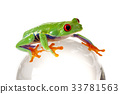 Tree frog 33781563