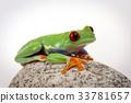 Tree frog 33781657