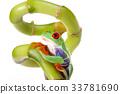 Tree frog 33781690