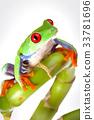 Tree frog 33781696
