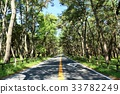 pinetree, pine forest, straight path 33782249