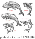 Giant sea animals shark whales vector sketch icons 33784884