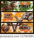 动物 野生 动物园 33784984