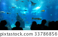 Silhouettes of people against blue aquarium. 33786856