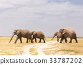 Herd of wild elephants in Amboseli National Park 33787202