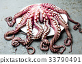 Seafood octopus. Whole fresh raw octopus on gray 33790491