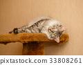 Fluffy cat 33808261