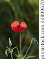 a, flower, garden 33809670