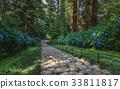 hydrangea, stone steps, pray road 33811817