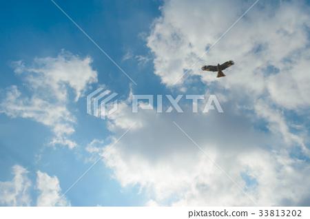 Flying in the sky 33813202
