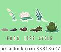 Frog Life Cycle Elements 33813627