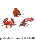 vector sketch lobster, crab squid set isolated 33814689