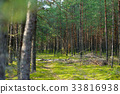 forest, pine, mixed 33816938