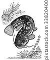 鯰魚 黑白 單色 33820400