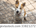 Dog behind the iron fence 33821272