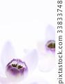 식물, 꽃, 플라워 33833748