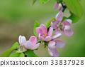 식물, 꽃, 플라워 33837928
