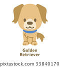 golden retriever dog 33840170