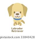 拉布拉多犬 33840428