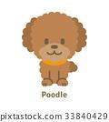 푸들, 개, 강아지 33840429