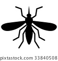 mosquito on white background 33840508