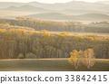 승마,자작나무,내몽고,중국 33842415