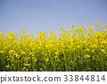 경기도, 로우앵글, 봄꽃 33844814
