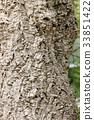 大树 树 树木 33851422