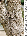 大树 树 树木 33851423