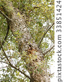 大树 树 树木 33851424