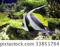 어류, 물고기, 생선 33851764