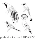 Set of tropical birds hand draw on a white 33857977