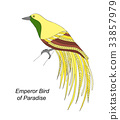 Tropical bird hand draw on a white background. 33857979
