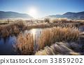 sunrise, reed, background 33859202