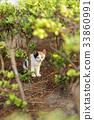 毛孩 貓 貓咪 33860991