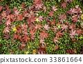 fallen, leaves, defoliation 33861664