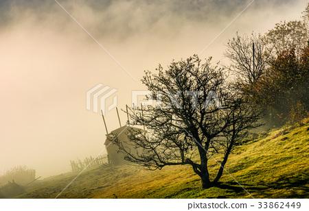 naked tree on hillside in fog at sunrise 33862449