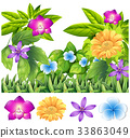 flower tropical colorful 33863049